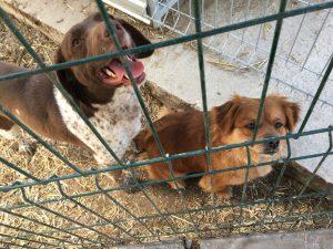 Neuzugange Hundevermittlung Fellfreunde De E V