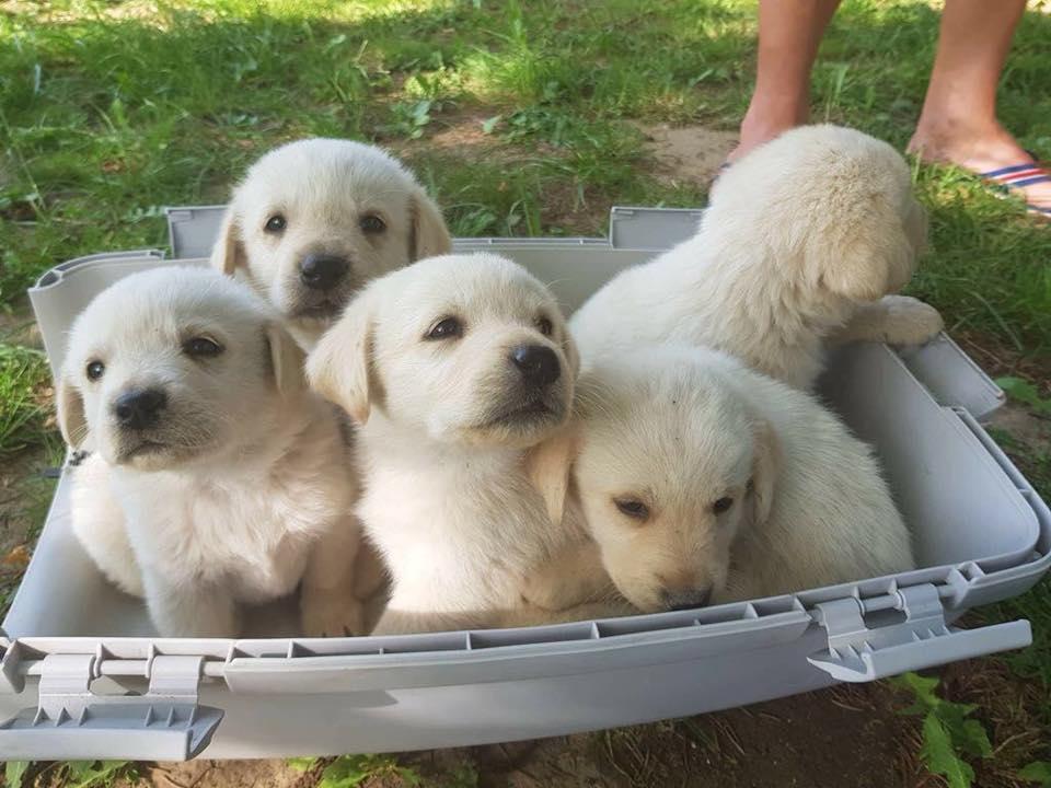 Hunde Aus Ungarn Tiervermittlung Solingen Adoption Hund