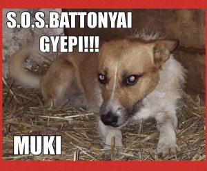 Tötung Muki