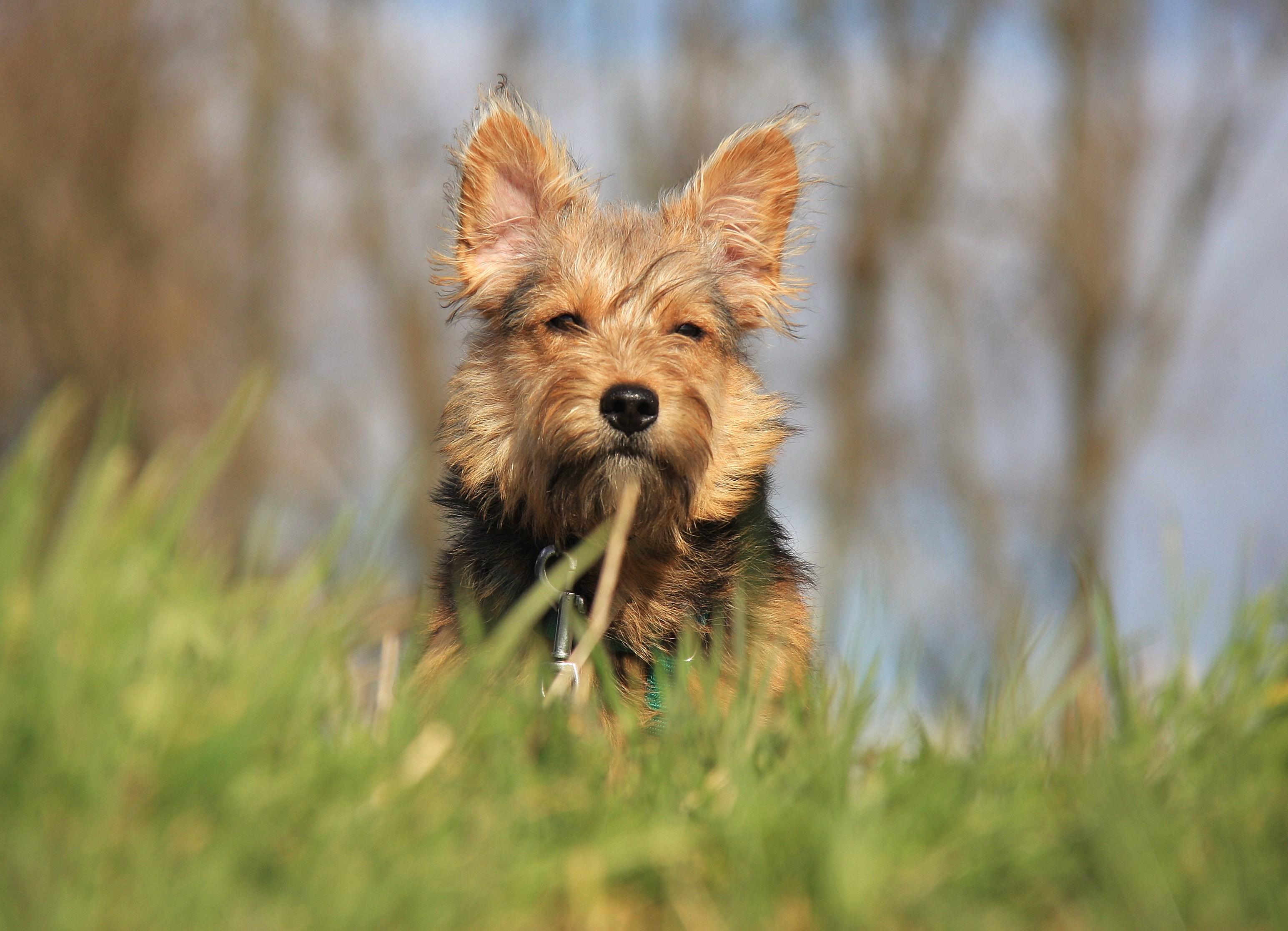Hari, kleine Schmusebacke mit Terrierblut
