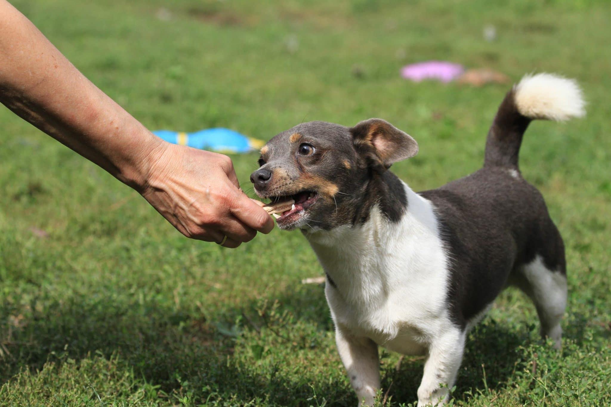 ein fröhlicher Terrier-Mix