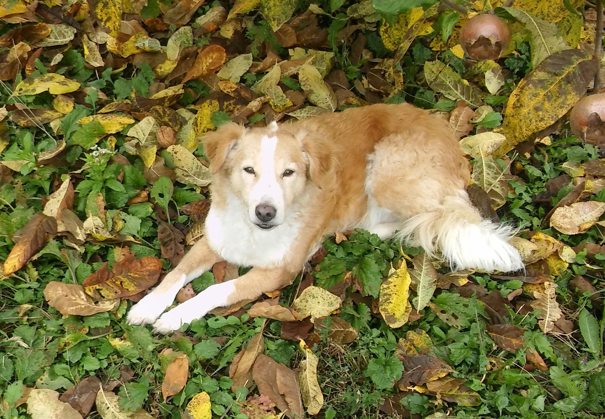 Bogi genießt die Hundegesellschaft.
