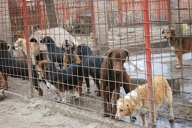 Bogi wurde aus einer der schlimmsten Verwahranstalten gerettet.