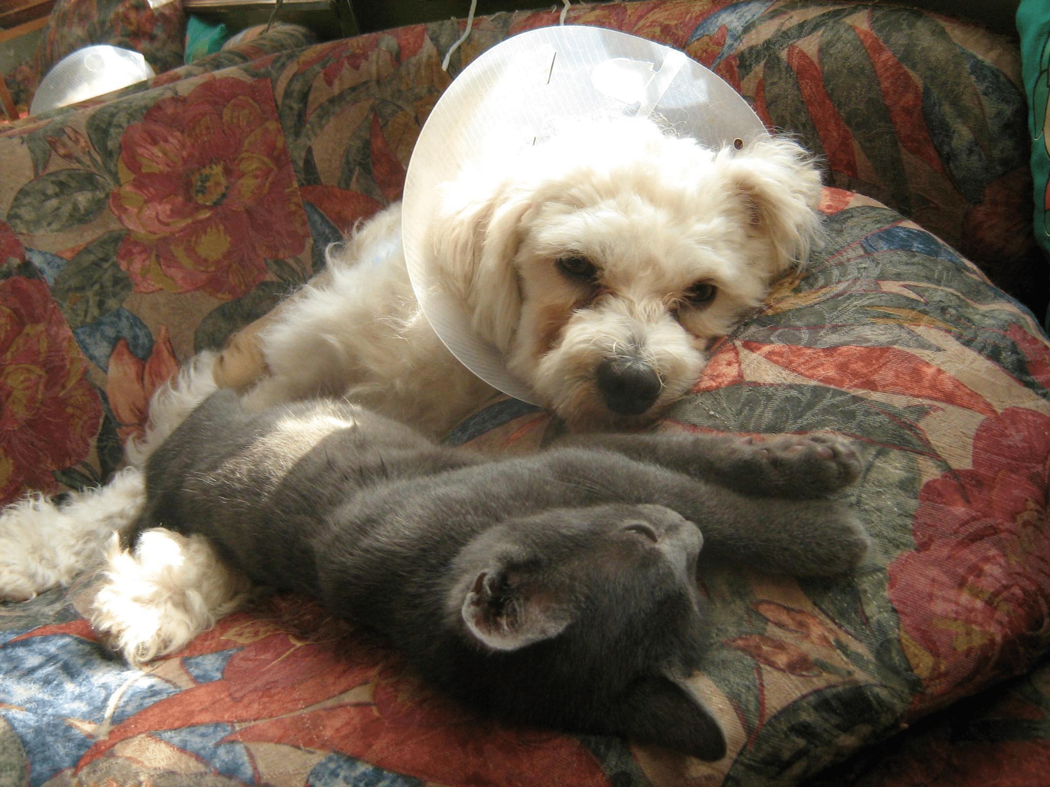 Panka am Tag der Aufnahme ins Tierheim