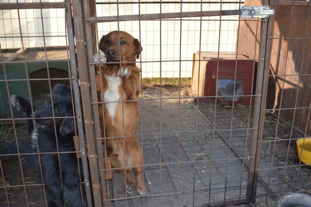 So hauste die Hundefamilie im Hinterhof